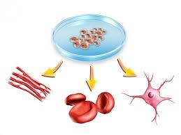 เซลล์ซ่อมเซลล์